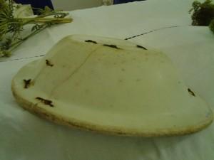 il retro del piatto riparato con i ciappi