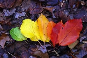 5. Colori autunno.10
