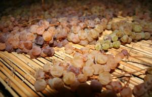 Appassimento dell'uva