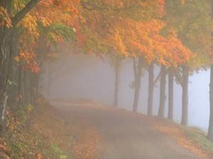 Bosco autunnale nebbia e silenzio