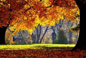 Colori autunno.12