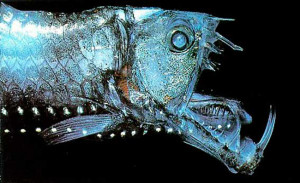pesce-vipera