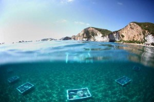 mostra subacquea a Ponza