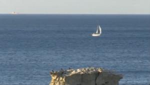 Il Mediterranea in navigazione