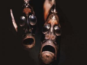 L'ascia d'argento o pesce ascia o pesce accetta