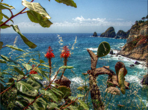 Ponza. Vegetazione sulla costa