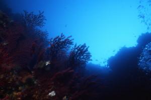 ambiente sottomarino