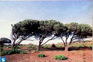 paesaggio de La Galite