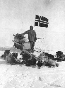 Amundsen Polo_sud. Con cani