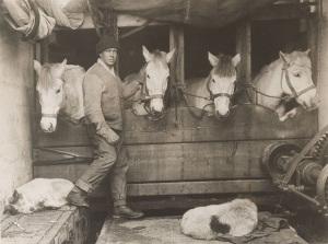 Foto by Ponting di Lawrence Oates coi i cavalli della spedizione
