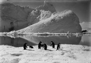 Pinguini ghiacciaio