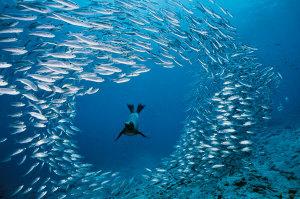 branco di pesci
