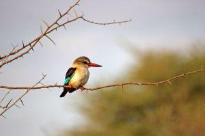 12 colibrì