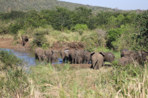 15 elefanti