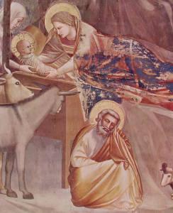 Giotto - La Natività. Particolare