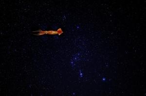 La notte del grande Totano