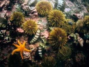 ricci di mare e stella marina