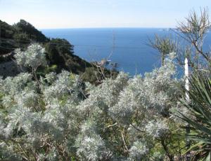 Artemisia. Lucia Rosa e Palmarola