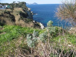 Artemisia. Macchia mediterr. Le Forna