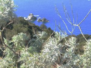 Artemisia. Sfondo Lucia Rosa
