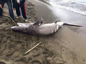 Lo squalo spiaggiato.1
