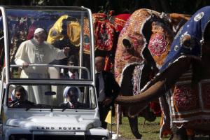 Papa SL. Elefanti