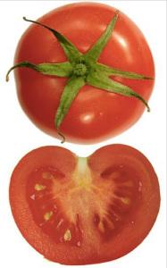Pomodoro. Solanum lycopersicum