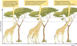 la teoria di Lamarck