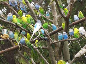 Uccelli in voliera
