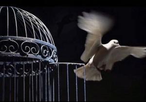 Volo via dalla gabbia