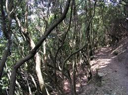 Zannone un sentiero nel bosco