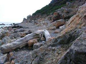 Zannone. Spiaggia di Levante