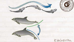 Correlazione tra il movimento e l'assetto della coda