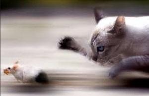 Il gatto col topo
