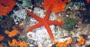 stella marina 2