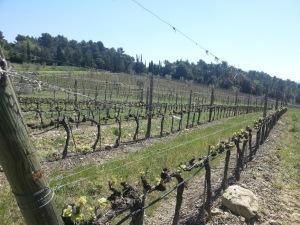 Le vigne del Brunello di Montalcino