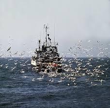 peschereccio al rientro 3