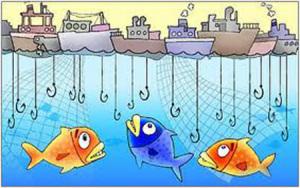 Pesca eccessiva.EdN