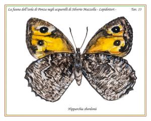 Farfalla di Ponza