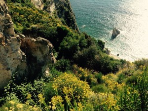 La vegetazione e il mare sotto. Versante di Chiaia