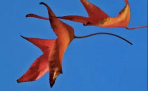Refolo di vento su due foglie