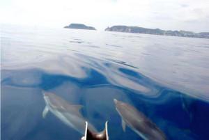 Delfini a Ponza