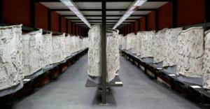 Esposiz. Museo Civiltà Romana all'EUR