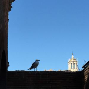 Gabbiano romano