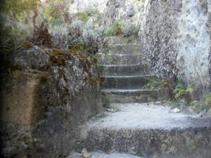 Scalini in cemento. Piante di elicriso
