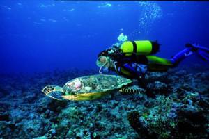 Immersione con tartaruga. Maldive