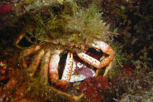 Maya con le alghe