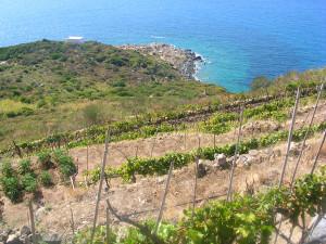 Punta Fieno vista dalle vigne