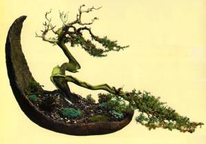 1.Bonsai di ginepro