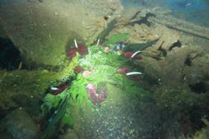 Ghirlanda sul relitto del Santa Lucia. 24 luglio 2011 nel 68° anniversario.2